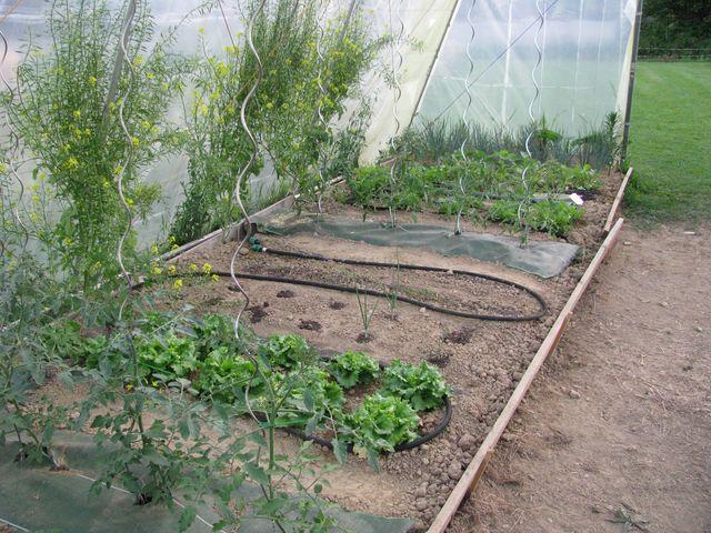 Nouveau Jardin, Nouveau Jardinier - Au Jardin, Forum De Jardinage
